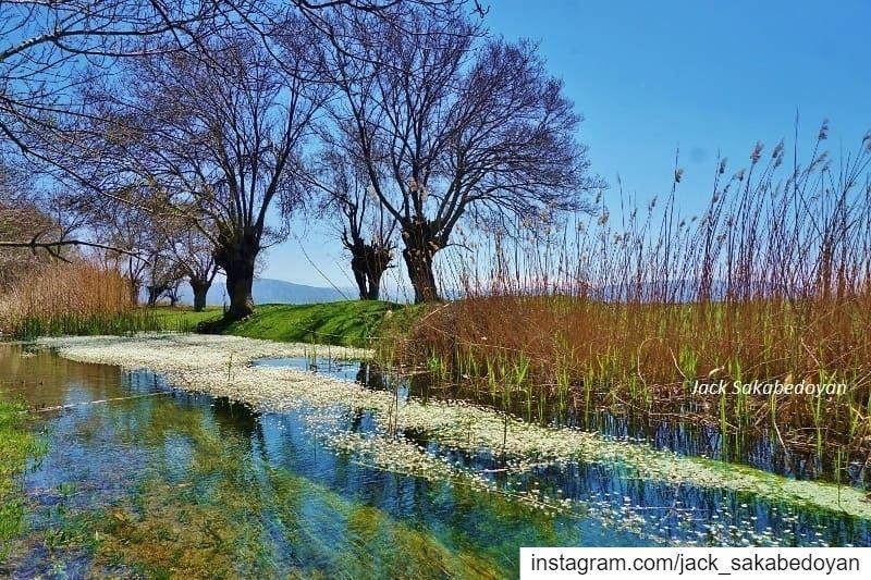Aamik wetlands aamiq aamik westbekaa westbekaa bekaa lebanon liban ...