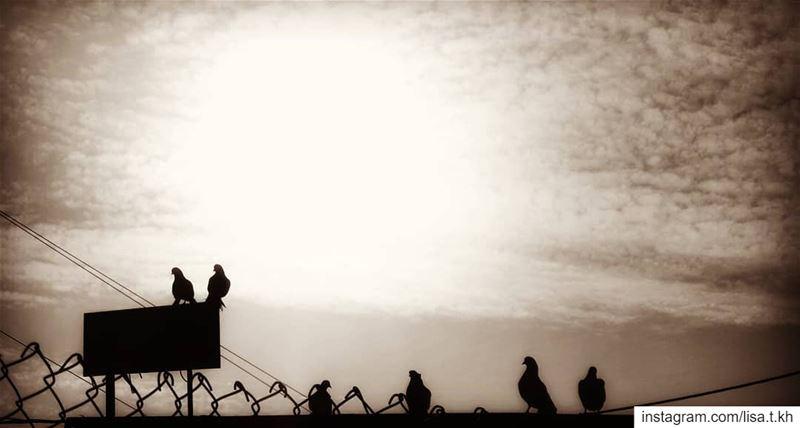 cometothelight 🕊️....... riseandshine nofear shineright birds... (Dahr Es-Suwan, Mont-Liban, Lebanon)