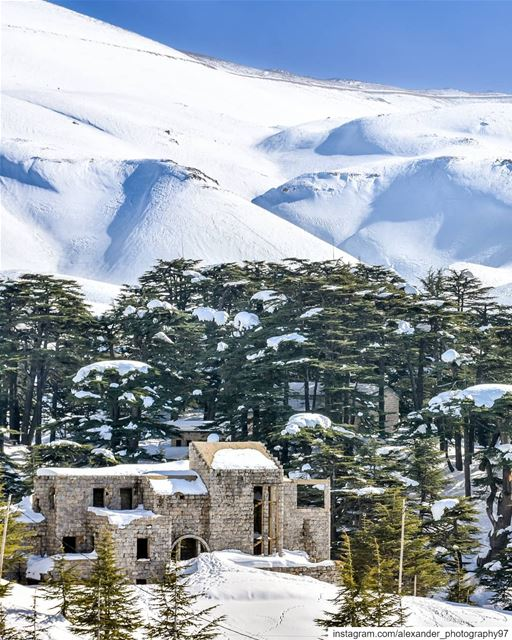 Abandoned in the snow ❄️🏚️ - Cedars of God Bcharre - 27/1/2019 snow ... (Arz Bcharé)