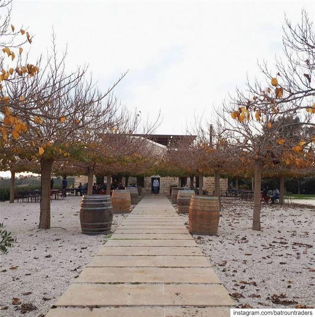batroun البترون_سفرة jran basbina @ixsirwine wine winery vineyard ... (Ixir Winery)