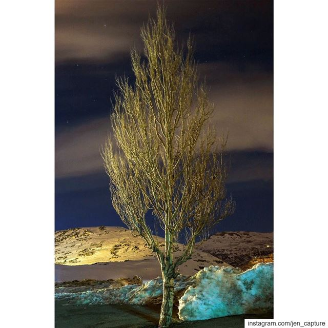 This tree is without leaves, blossoms or fruits. Its identical to a life... (Kfardebian, Mont-Liban, Lebanon)