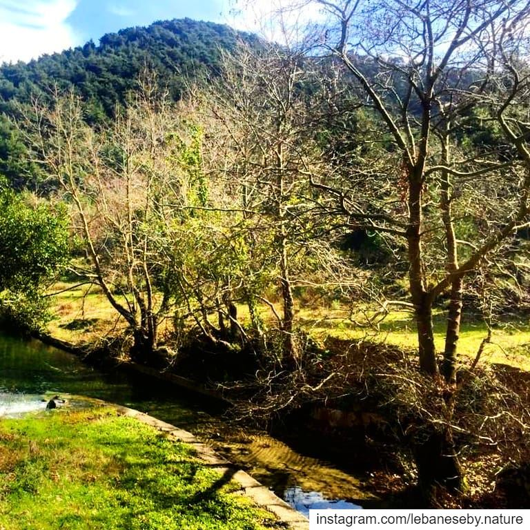 To appreciate winter beauty it is necessary to go out in the cold... (Akkar)