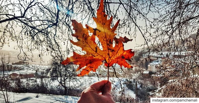Don't be afraid to  fall 🍁 fallseventimesstandupeight ehden 💚 ... (Ehden, Lebanon)