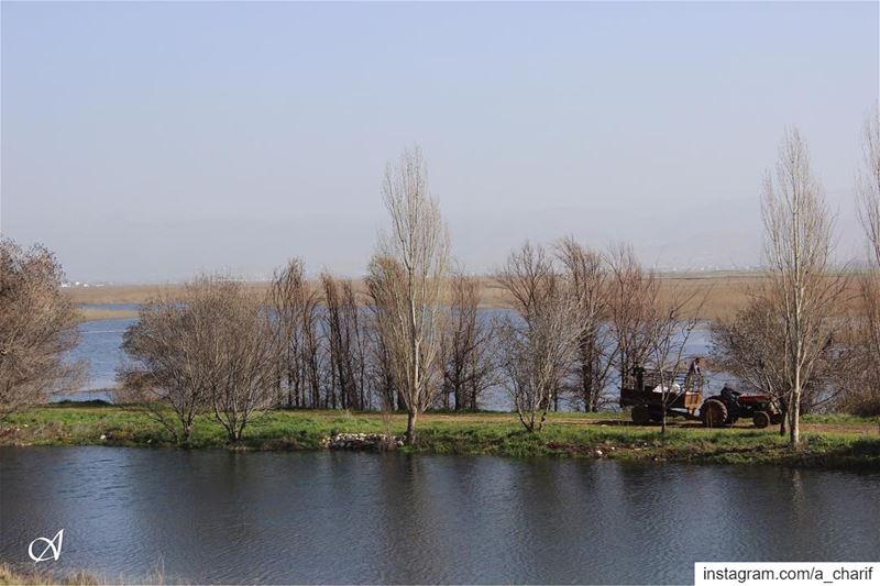 swamp wetlands ammiq ammiqreseve water trees agriculture lebanon ... (`Ammiq, Béqaa, Lebanon)