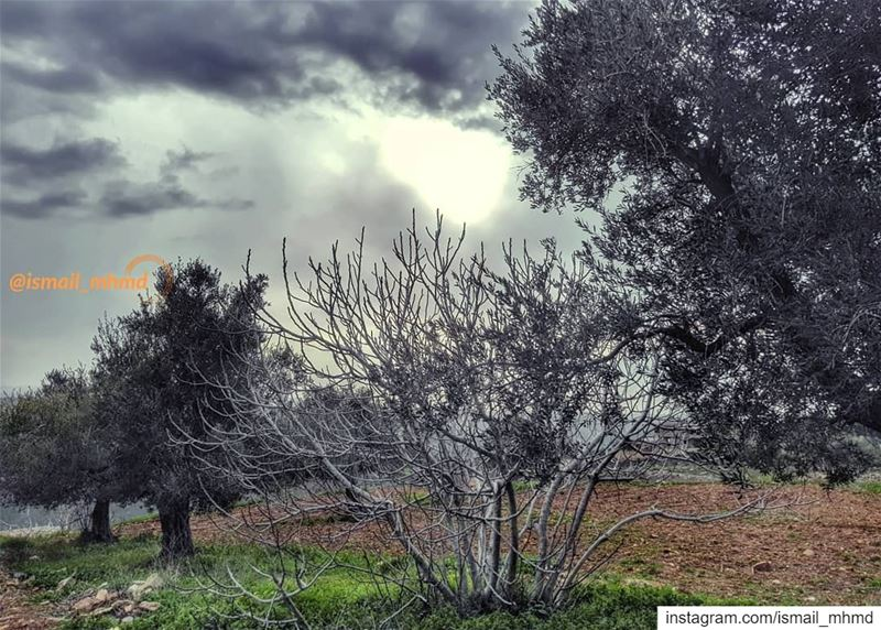 ~~☆☆ 📸1901311515 ☆☆~~ (Zawtar Ash Sharqiyah, Al Janub, Lebanon)