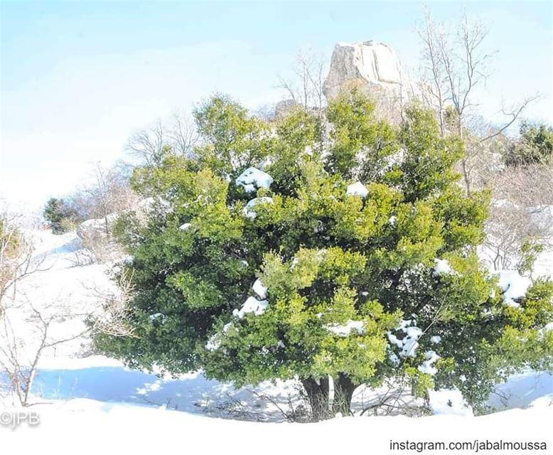 Another White Sunday ! JabalMoussa Snowshoeing @jp.boutros unescomab ... (Jabal Moussa Biosphere Reserve)