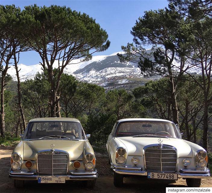 Sisters.•.•.•. MercedesBenz SClass W108 W111 Vintage ... (Lebanon)