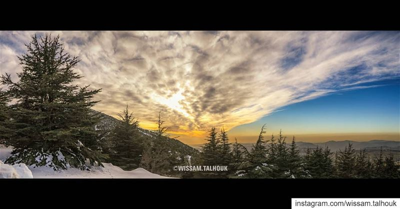 Everyone can see a beautiful view, but the challenge is how to transfer it... (Al Shouf Cedar Nature Reserve)