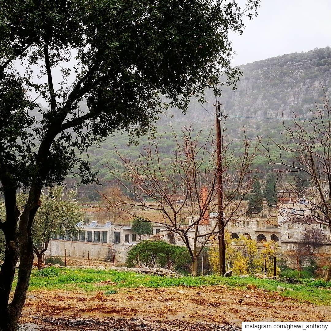 Under the rain drops☔💚_______________________________ rainy nature ... (Al Knaysah, Mont-Liban, Lebanon)