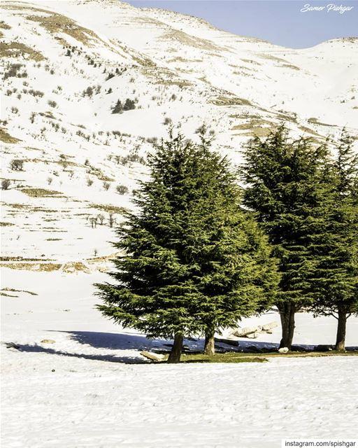 Lebanon... 🌲❄..... Lebanon Lebanese snowy livecolorfully ... (Falougha, Mont-Liban, Lebanon)