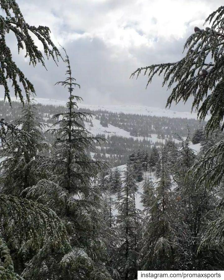 Join @promaxsports this Sunday, February 17, 2019 to Shouf Cedar Forest... (Bâroûk, Mont-Liban, Lebanon)