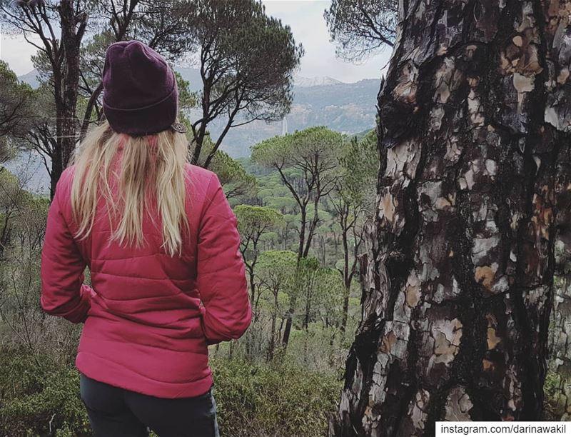 •Maison de la forêt•... woods pine forest hiking hikingadventures ...
