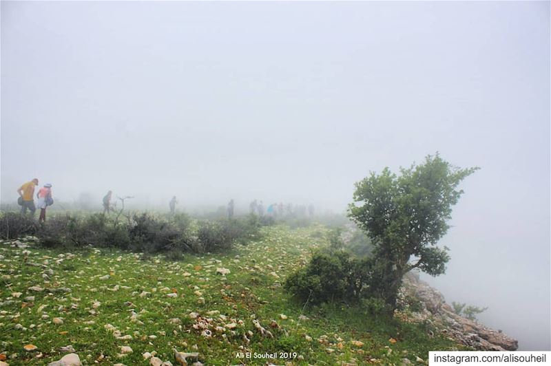 tb jezzine southlebanon hiking fug tree nature discoverearth ... (Jezzîne, Al Janub, Lebanon)