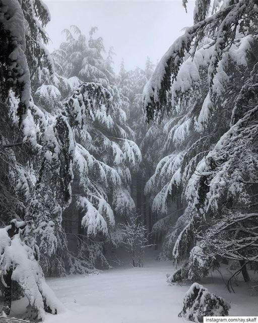 Long live the storm‼️.... ............... lebanon ... (Narnia)