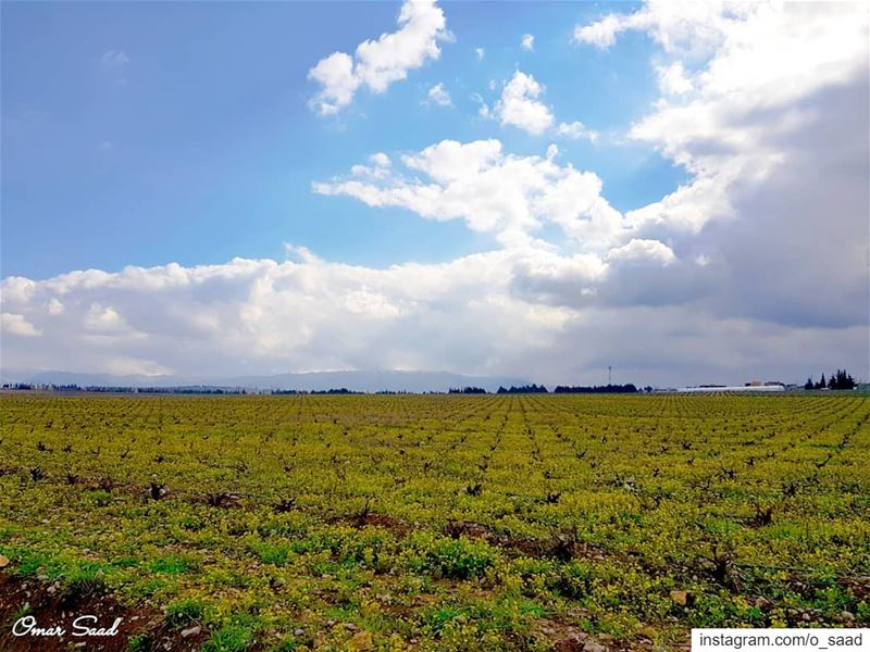 field land landscape photographe photooftheday beqaa lebanon ... (Lebanon)