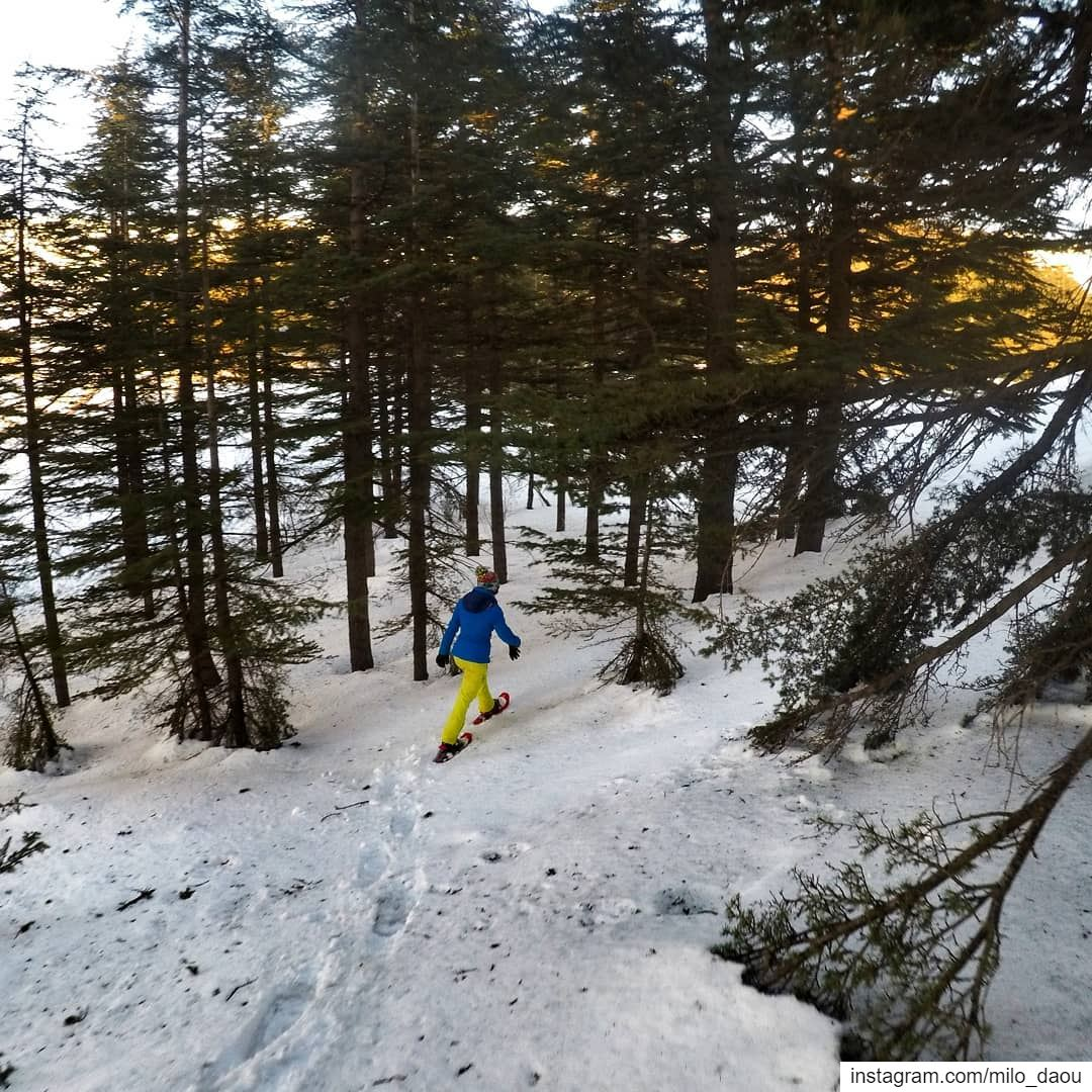 Chasing angels or fleeing demons, go to the mountains. ⛰️❄️🚶🏻♂️🌲🌲 ... (Cedars of God)