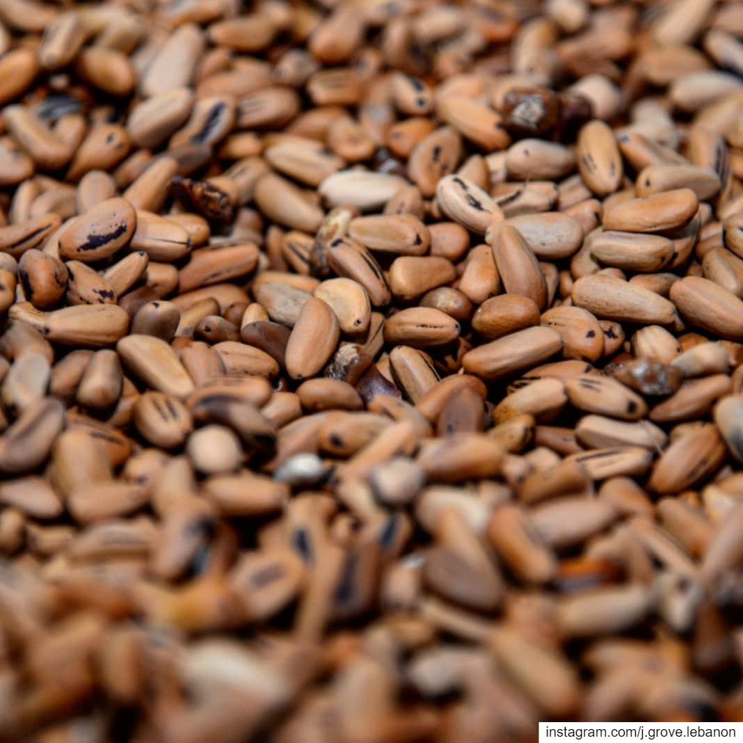 The new season's pine nuts, hand-sourced from local producers in Bkassine...