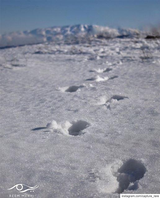 Step forward towards your dreams, nothing is impossible if you truly feel... (Maaser El Shouf Cedar Reserve محمية ارز معاصر الشوف)