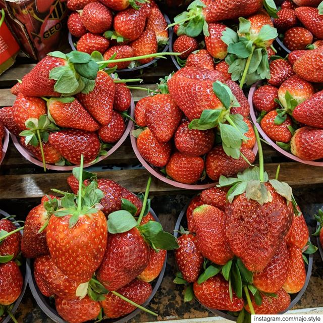 strawberry  fruit  fruits  fresh  yummy  instayummyfood   food  delicious...