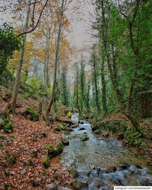 Soul walk 🚶♂️📸 @mikhaelbitar valley nature photography ... (Ouâdi Qannoûbîne, Liban-Nord, Lebanon)