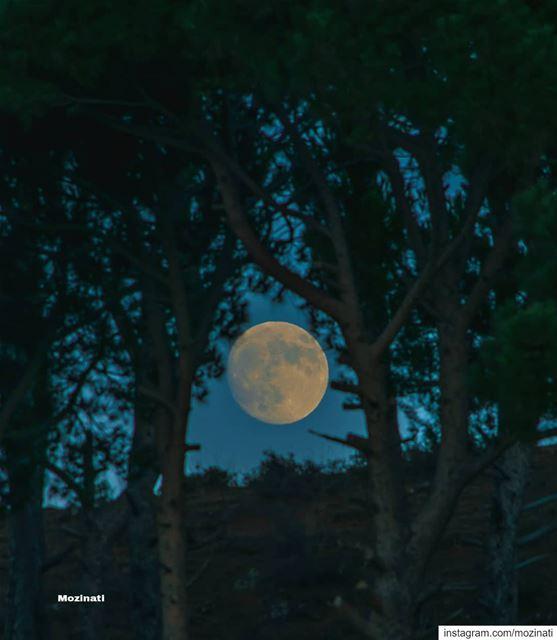 حبيبان نحن إلى أن ينام القمر..❤=========================================== (العيشية)