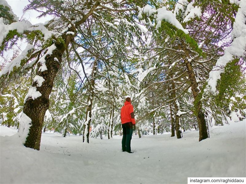 ....... nature nature_good natureporn snow cedars livelovelebanon...