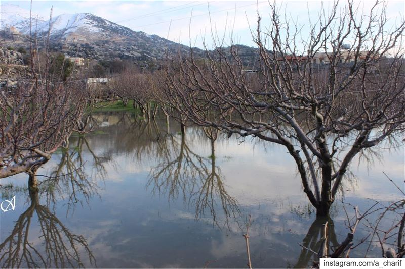 We cannot see reflection in running water. It is only in still water.... (Jezzîne, Al Janub, Lebanon)