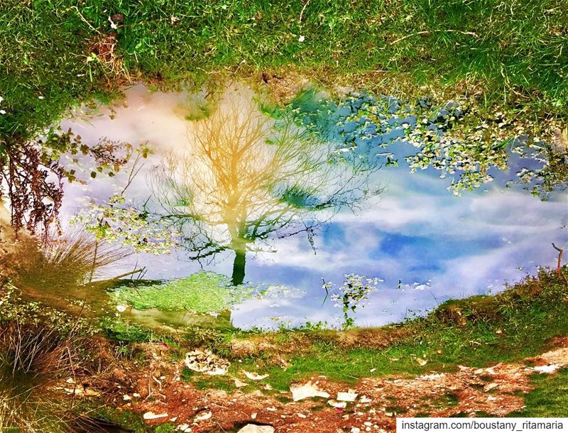 Love that reflection of nature.....💚••••••••••••••••••• (Zgharta District)