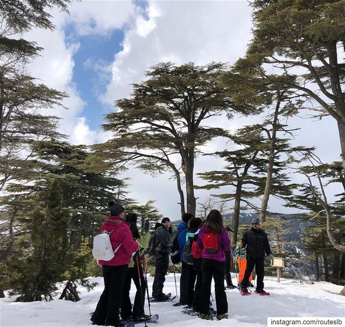 Exploring the wonderful Tannourine Cedars ❄️🌲.. batrountourism  fun ... (Batroûn)