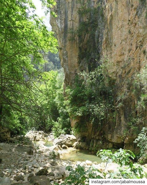Embrace the beauty of nature. JabalMoussa unescomab unesco ... (Jabal Moussa Biosphere Reserve)
