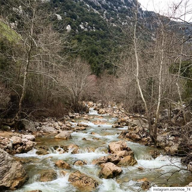 A river cuts through the rock, not because of its power, but because of... (Abou Mîzâne, Mont-Liban, Lebanon)