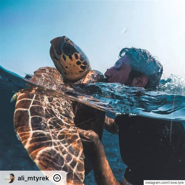 """🐢❤️🐢❤️🐢❤️🐢taken with a @gopro hero 6.... goprohero4 goprohero ..."