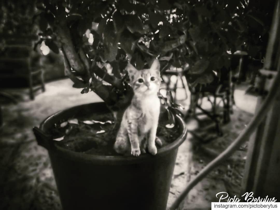 """The smallest feline is a masterpiece."" – Leonardo da Vinci saturday ..."