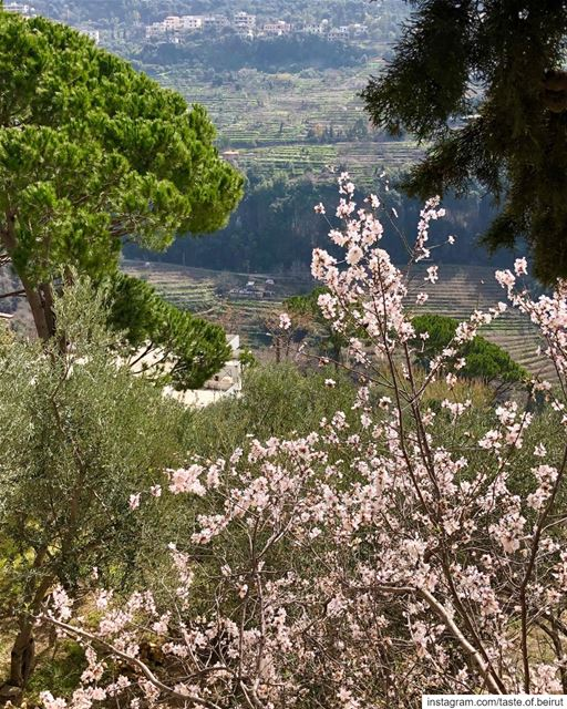 Trees in buds, Spring is around the corner 🤩 Lebanese  livelovelebanon ... (Chouf)