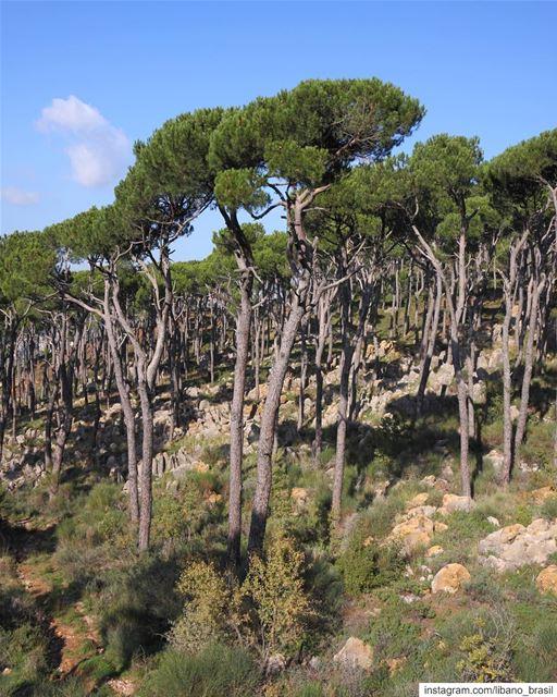 🇱🇧🇧🇷 Nada como começar o dia apreciando a natureza. Vejam que linda... (Lebanon)