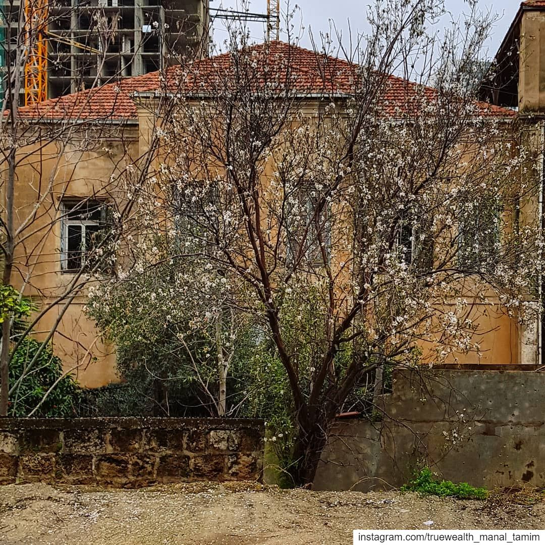 What does it take to build a house and to grow a tree : time, money, ... (Beirut, Lebanon)