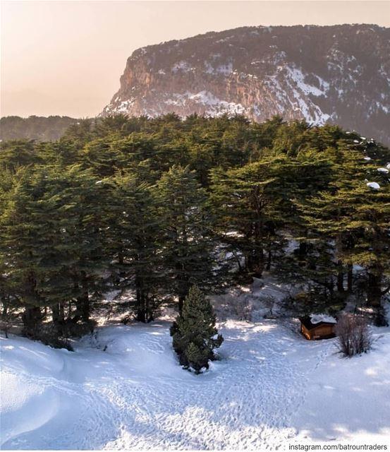 batroun tannourine village البترون_سفرة mountains snow cedar ... (Arz Tannoûrîne)