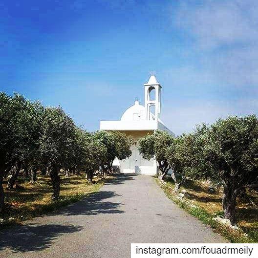 biking northlebanon olivetrees greekorthodoxchurch whitechurches ... (Anfeh Al-Koura أنفه الكورة)