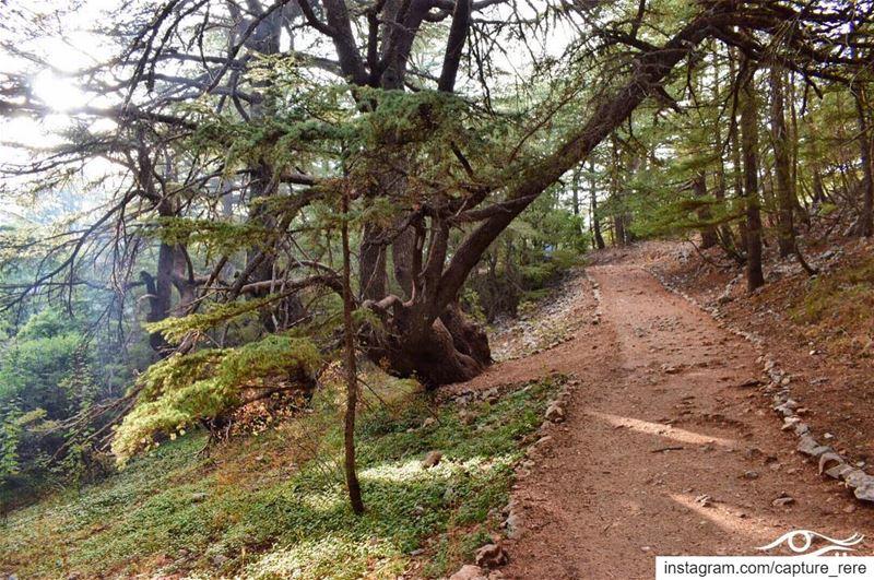 مهما كان الطريق الى قلبك صعباً، سيجده ربما شخص،او كتاب،أو حتى طموح... يع (Bâroûk, Mont-Liban, Lebanon)