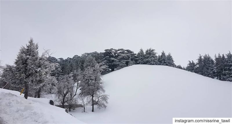 cedars lebanon🇱🇧 winter snow skiing instapic instagram nature ... (The Cedars of Lebanon)