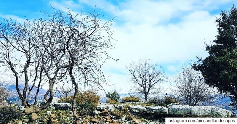 hikingtrail hikinglb hikingadventure naturelover naturephotography... (Nature Walk)