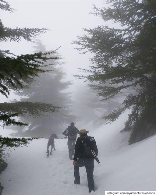 Into the wild 🗻 myadventureslebanon mountaineering choosemountains ... (Lebanon)