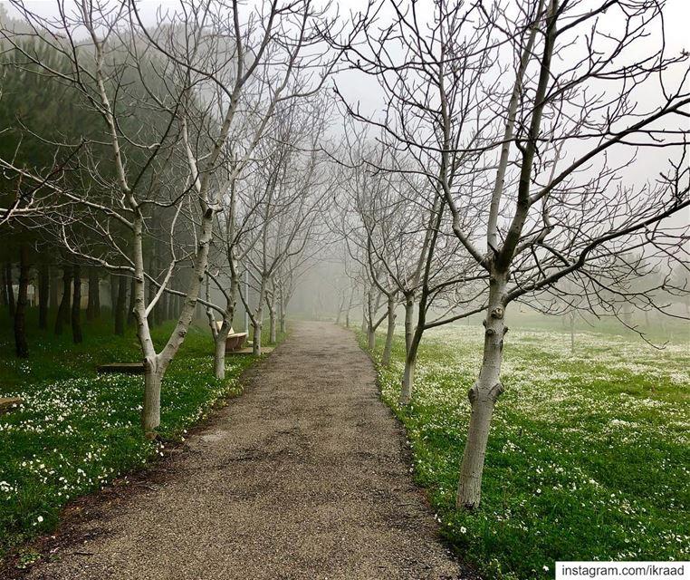 FairyForest 🌫 🌳 (Chbânîyé, Mont-Liban, Lebanon)