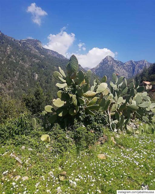 Live from Chouwan reserve entrance. JabalMoussa unescomab unesco ... (Jabal Moussa Biosphere Reserve)
