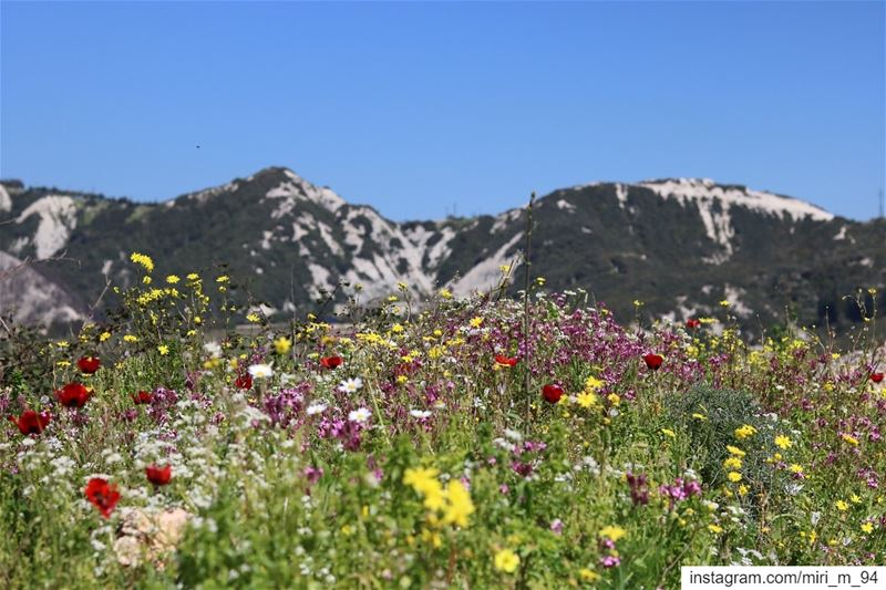 flowers flower petal petals nature beautiful love pretty plants ... (Lebanon)