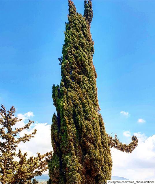 hellotree branchemain arbre avc une main qui accueille kawkaba ... (Kawkaba - Jnoub)