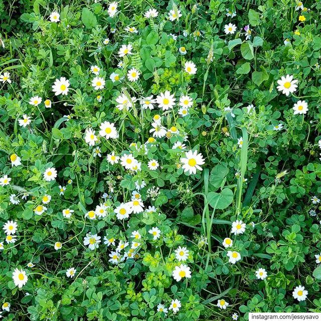 Loving Spring Vibes! 🌼🌼🌼...-----------------------------------------