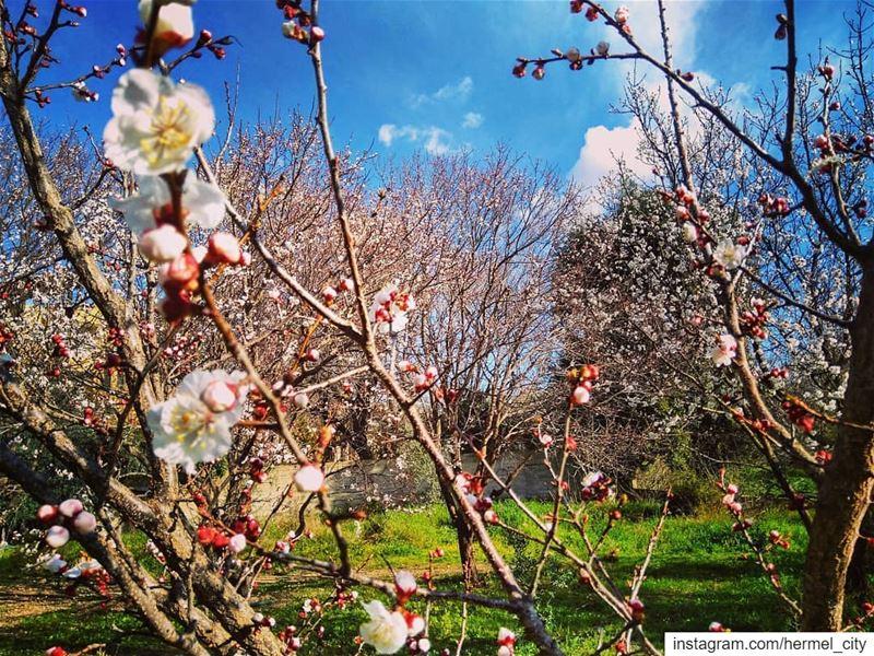 Spring spirit by @firassafwan hermel hermel_city bekaa ... (Hermil, Béqaa, Lebanon)