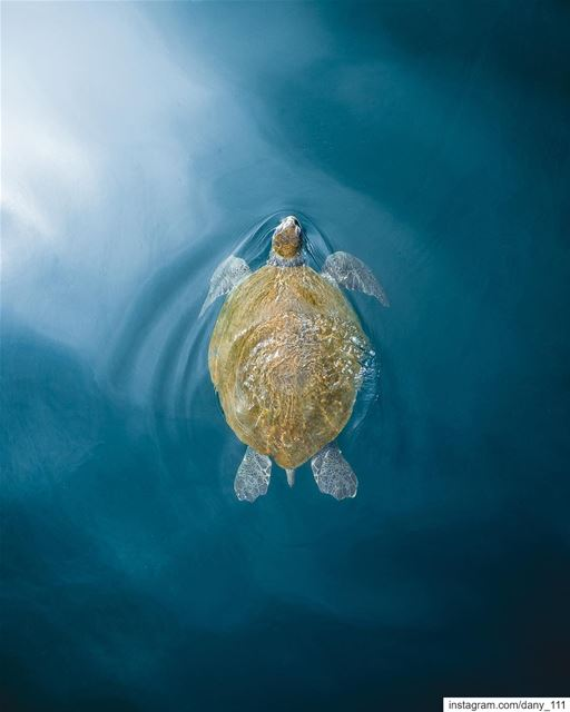 I always took photos of green turtles in the water while swimming with... (Batroûn)