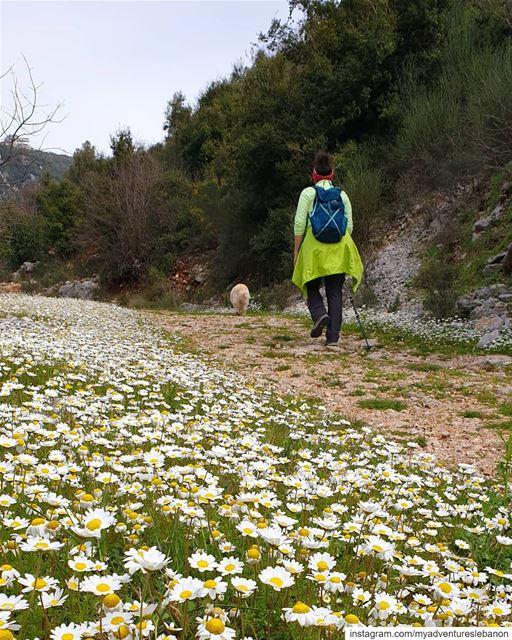 Hello spring 🦋🌼 myadventureslebanon mountaineering choosemountains ... (Wadi El Salib - Kfardebian)
